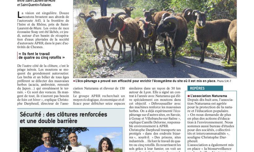12 moutons au bord de l'autoroute