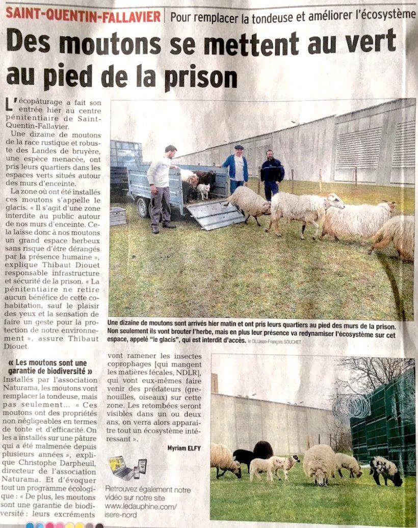 Des moutons à la prison de St Quentin Fallavier