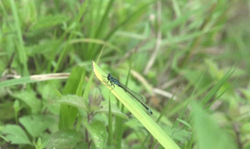 L'Echo-responsable #4 : les insectes