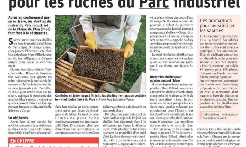 Plaine de l'ain : saison mouvementée pour les ruches